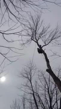 B M Abattage et Émondage - Service d'entretien d'arbres - 819-743-5880