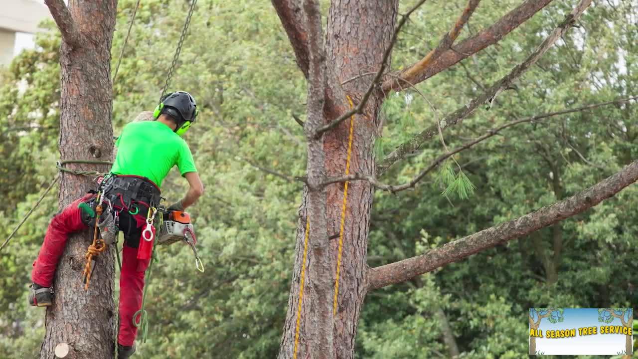 All Season Tree Service - Tree Service - 780-464-2436