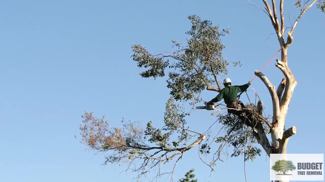 Budget Tree Removal - Tree Service - 613-884-5550