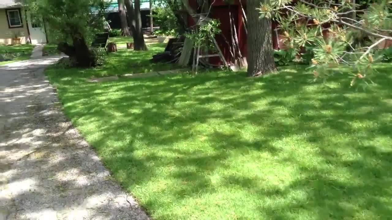 All Seasons Kennels - Video 2