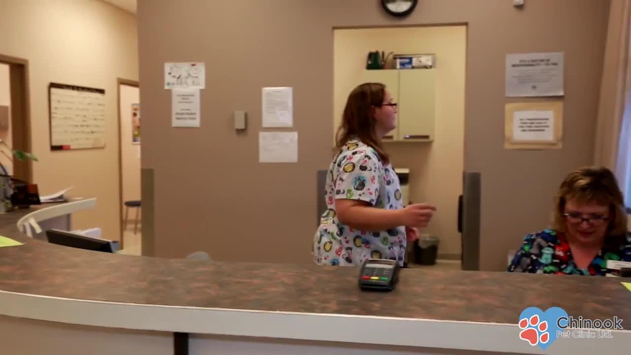 Chinook Pet Clinic - Veterinarians - 403-327-2344