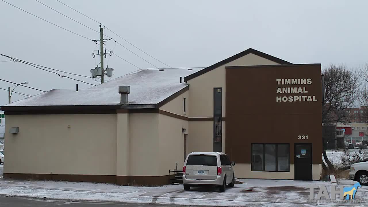 Timmins Animal Hospital - Veterinarians - 705-264-2277