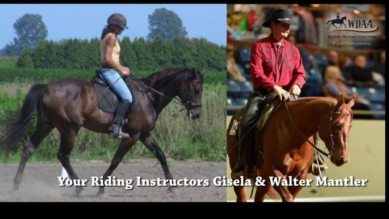 Symphony Stables-Tack - Stables - 519-825-9708