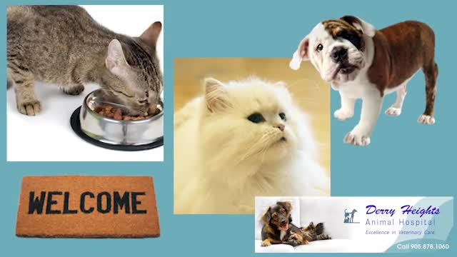 Derry Heights Animal Hospital - Veterinarians - 905-878-1060