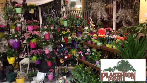 Plantation Flowers & Gifts - Video 1