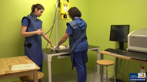 Clinique Vétérinaire Johannaise - Vidéo 1
