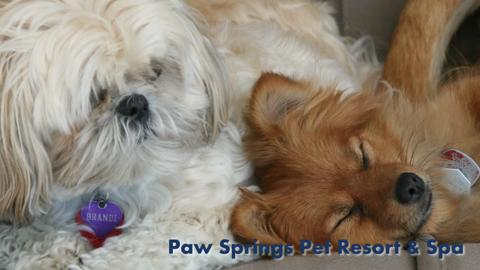 Paw Springs Pet Resort & Spa Ltd - Video 1