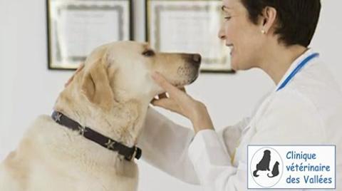 Clinique Vétérinaire Des Vallées - Vidéo 1