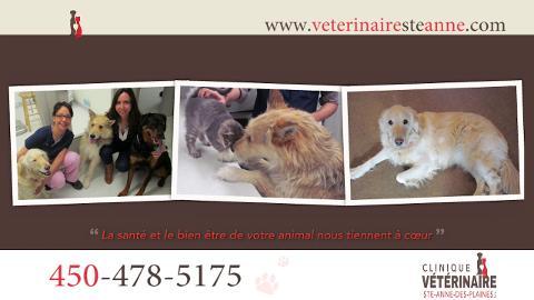 Clinique Vétérinaire Ste-Anne-des-Plaines Inc - Vidéo 1