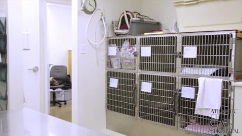 Atlantic Cat Hospital - Video 1