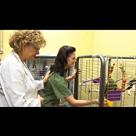 Hôpital Vétérinaire pour Oiseaux et Animaux Exotiques - Vidéo 1