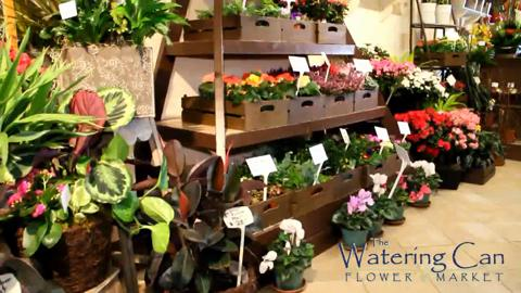 The Watering Can Flower Market - Video 1