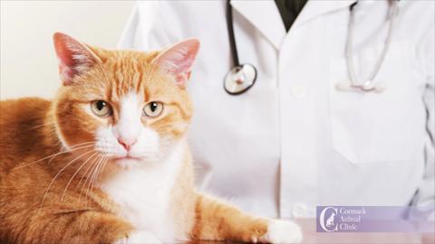 Cormack Animal Clinic - Video 1