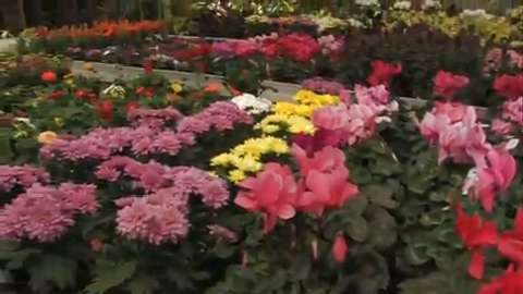 Sunnyside Greenhouses Ltd - Video 1
