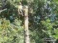 Morris The Treeman Ltd - Tree Service - 604-985-2828