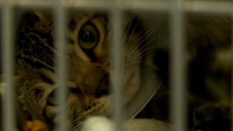 Clinique Vétérinaire de Rimouski Inc - Vidéo 1