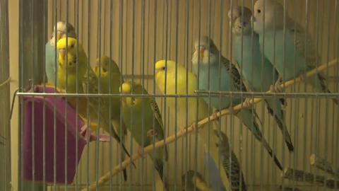 Animalerie Paul - Vidéo 1