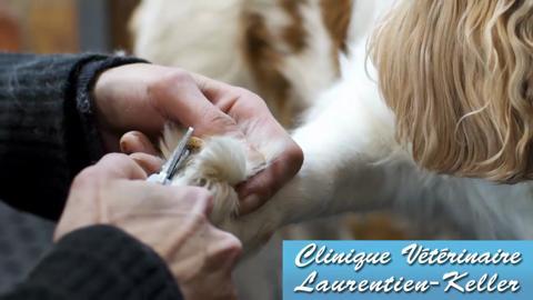 Clinique Vétérinaire Laurentien-Keller - Vidéo 1