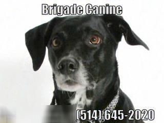 Ecole De Dressage Brigade Canine - Vidéo 1