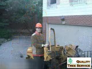 Quality Tree Service - Video 1