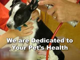 Anderson Animal Hospital - Video 1
