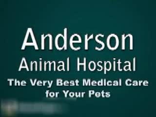 Anderson Animal Hospital - Veterinarians - 204-237-4555