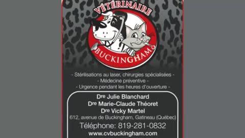 Voir le profil de Clinique Vétérinaire de Buckingham - Orleans