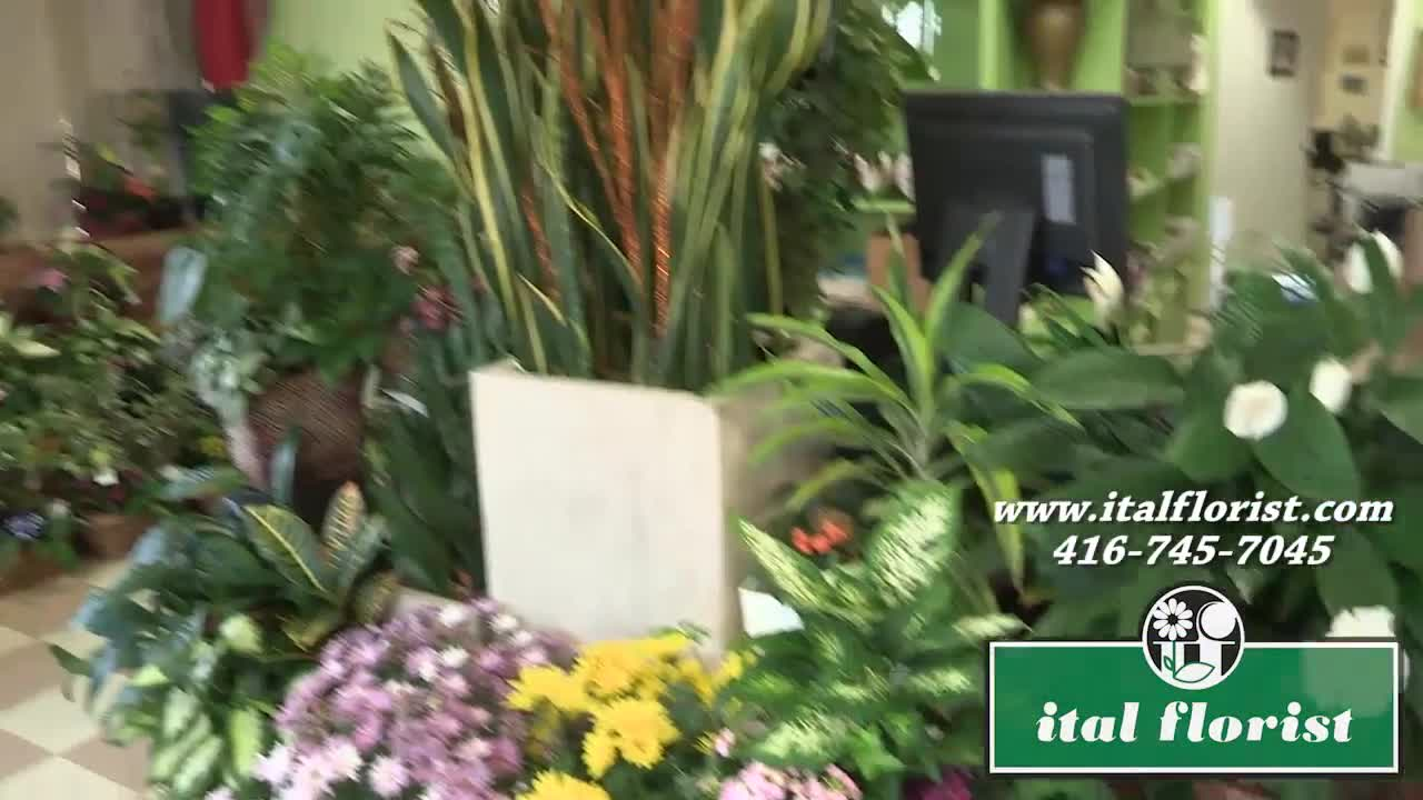 video Ital Florist Limited