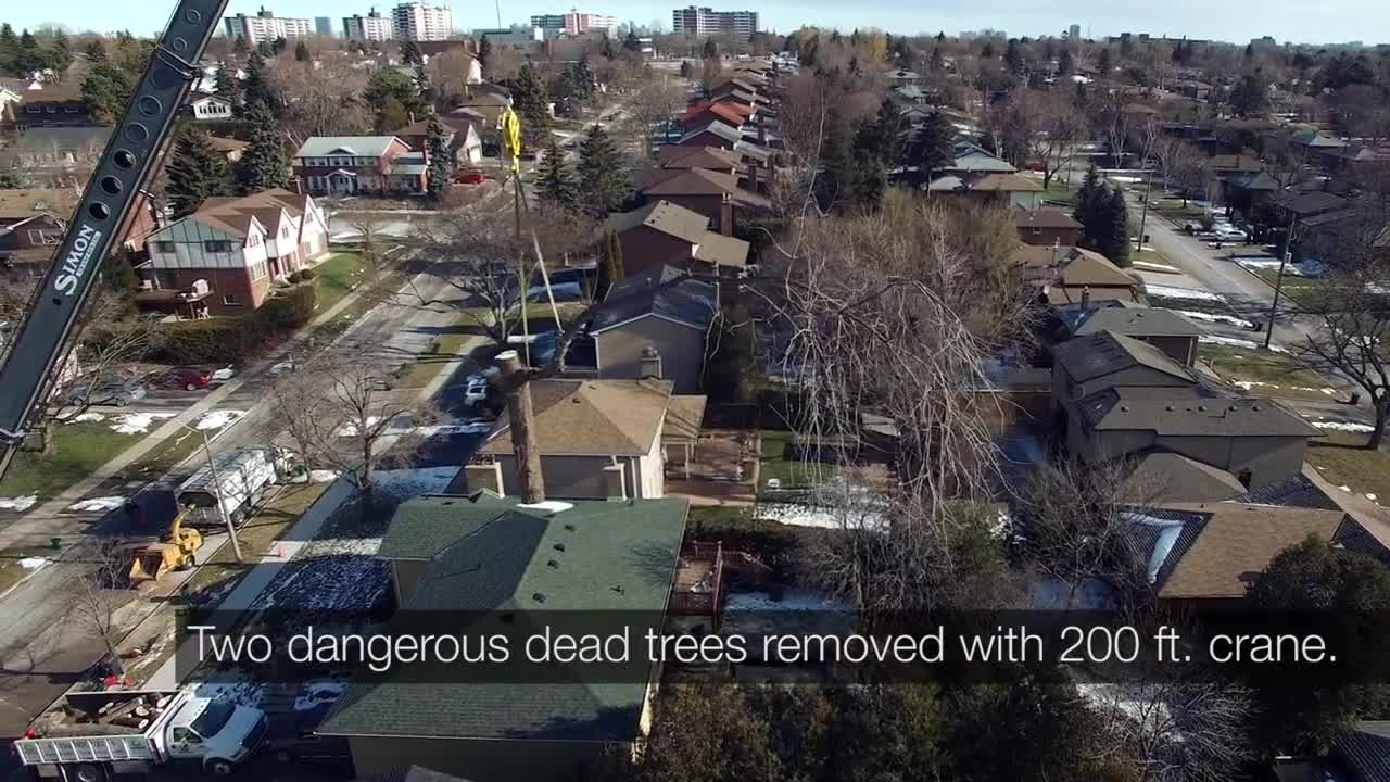Rooted Tree Services - Tree Service - 416-236-4490