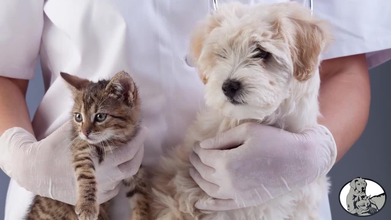 Clinique Vétérinaire Des Vallées - Vétérinaires - 819-281-1114