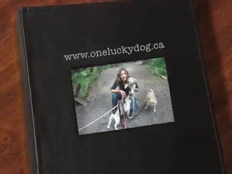One Lucky Dog - Pet Sitting Service - 4164848584