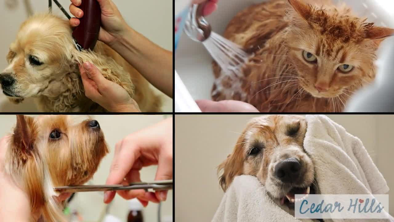 Cedar Hills Animal Hospital - Pet Grooming, Clipping & Washing - 604-583-7387
