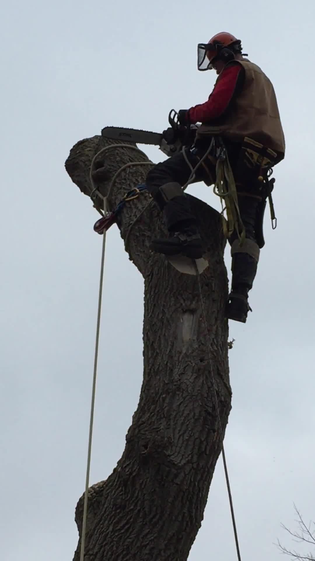 video Capella Tree Service