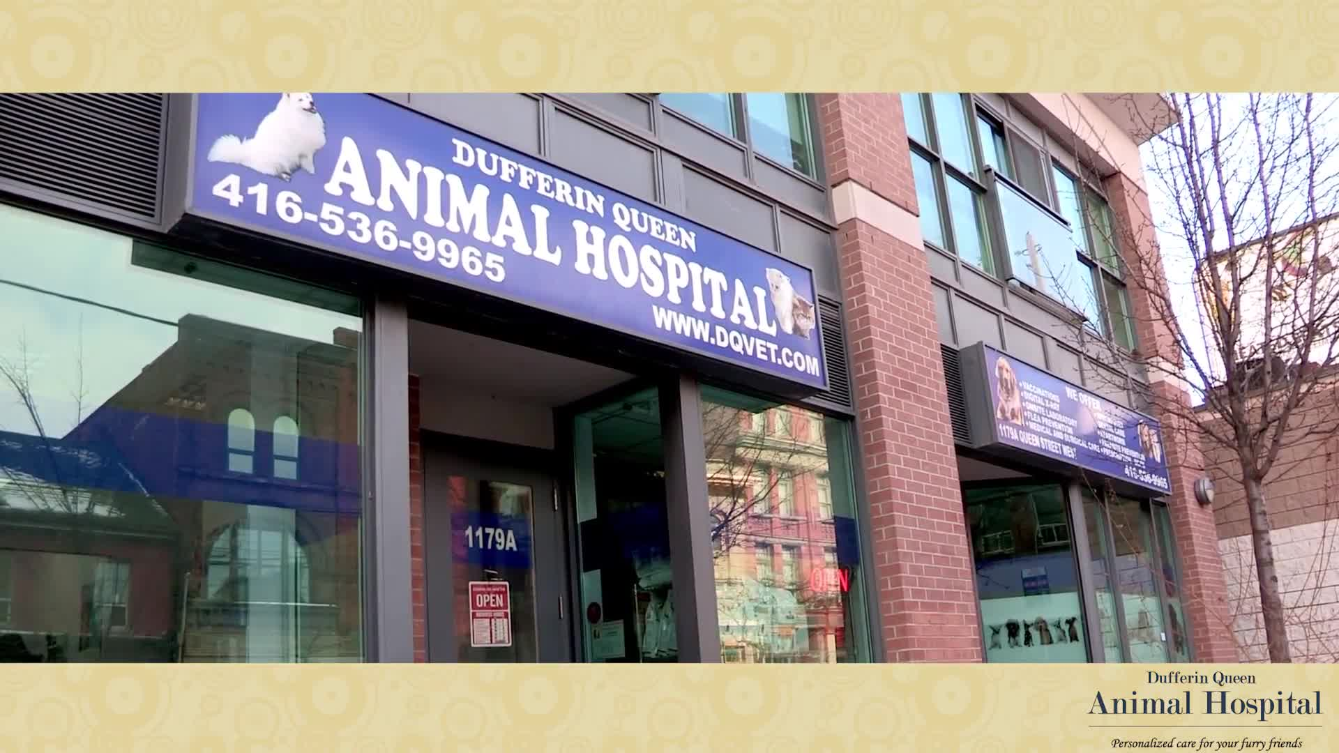 video Dufferin Queen Animal Hospital