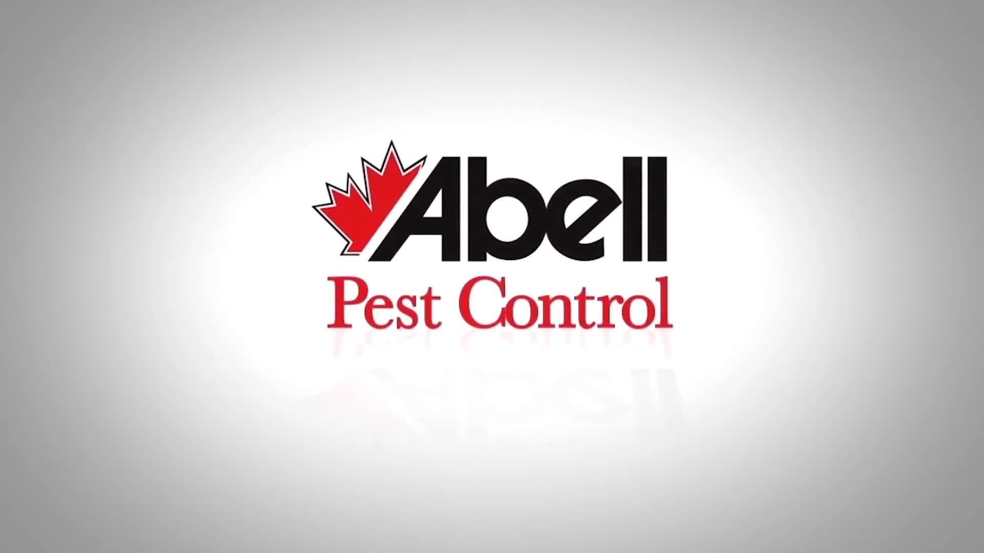 Abell Pest Control Bed Bugs