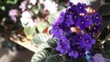 Fleuriste Cormier Inc - Fleuristes et magasins de fleurs - 819-379-3459