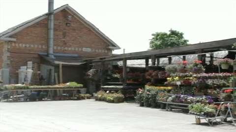 video Snowball Garden Centre