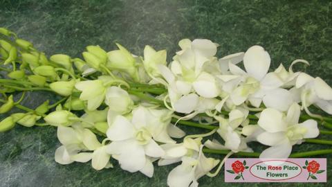 video Floral Classics